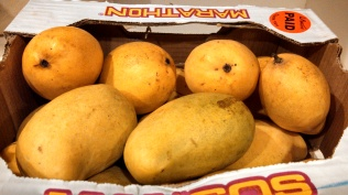 Manila Mangoes